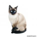 แมววิเชียรมาศ