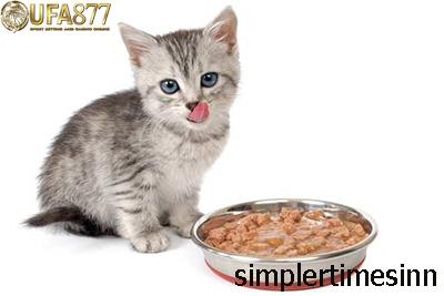 เคล็ดลับในการเลือกอาหารแมว
