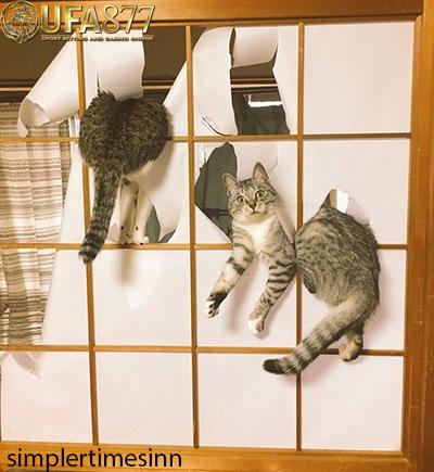 วิธีแก้นิสัยแมวดื้อ