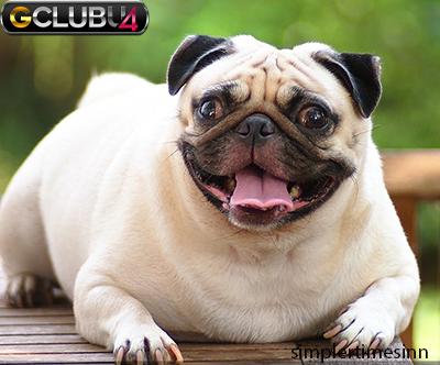 โรคอ้วนของสุนัข