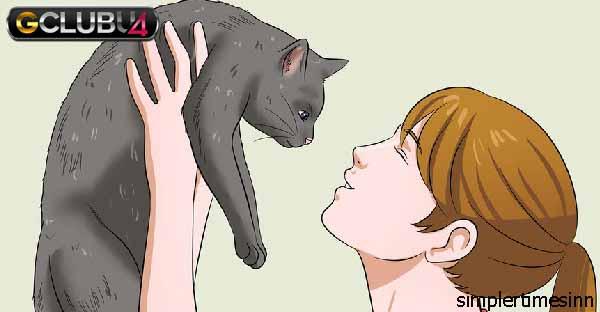 วิธีทำให้แมวรักคุณ