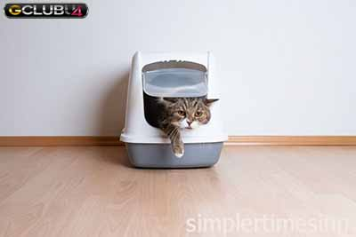 สิ่งที่ห้ามทำกับแมว