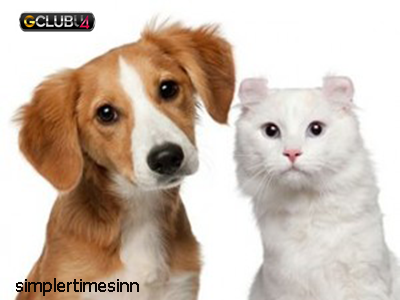 5 แนวคิดการเสริมสร้างแมวและสุนัขที่สร้างสรรค์