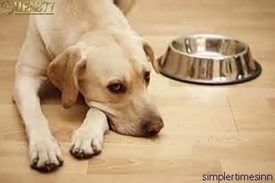 โรคลำไส้อักเสบในสุนัข