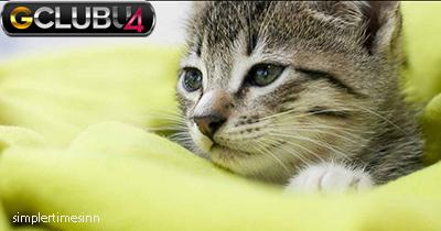 วิธีฝึกแมวของคุณไม่ให้ใจร้าย