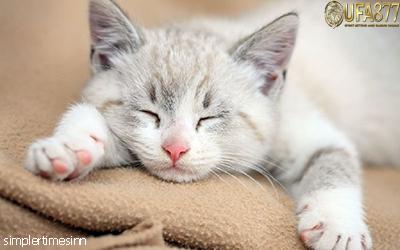 แมวมีอาการสะอึกหรือไม่?