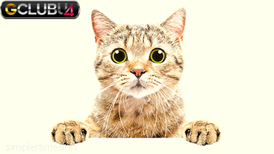 เคล็ดลับยอดนิยมในการตั้งชื่อแมวของคุณ