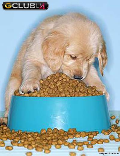 สิ่งแปลกปลอมในหลอดอาหารของสุนัข