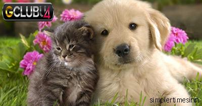 เหตุผลในการได้รับใบอนุญาตของแมวหรือสุนัข