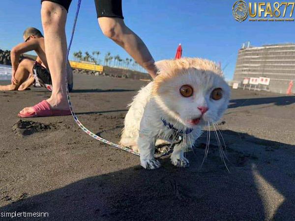 วิธีพาแมวออกไปข้างนอกบ้าน