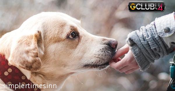 ทำไมสุนัขถึงชอบเลีย