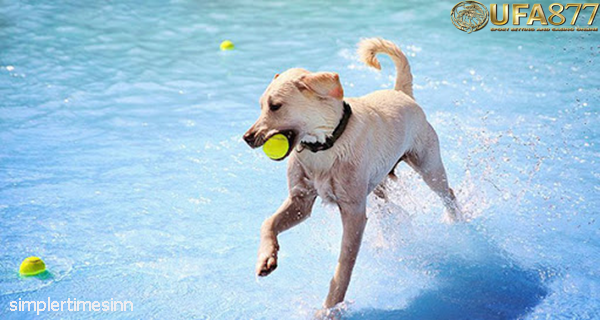 ประโยชน์ของการว่ายน้ำสำหรับสุนัข