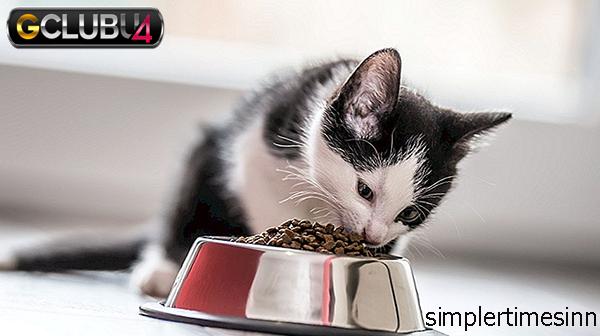 จะทำอย่างไรเมื่อแมวของคุณไม่กินอาหาร