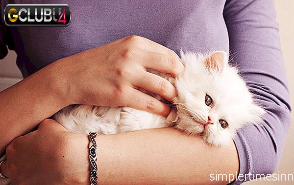 การแท้งลูกของแมว เกิดจากอะไร