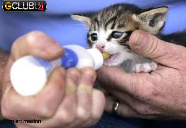 วิธีดูแลลูกแมวแรกเกิด