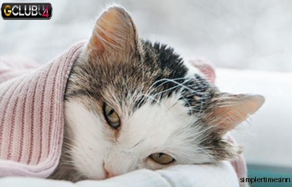 วิธีดูแลแมวป่วย