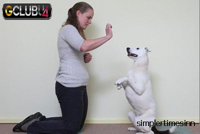 การฝึกและดูแลสุนัขหูหนวก
