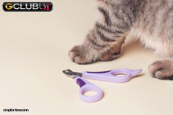 วิธีตัดเล็บแมวที่บ้าน