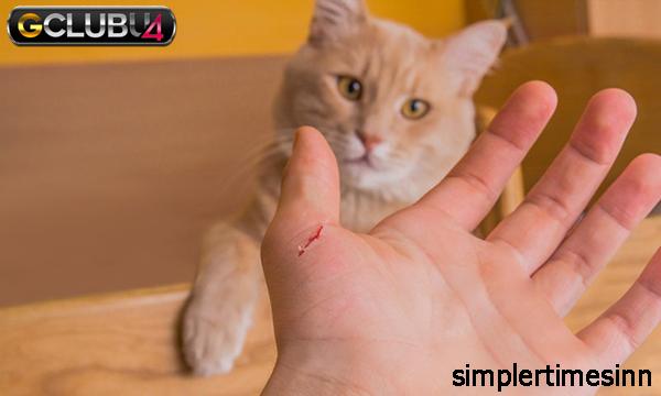 แมวกัดเป็นอันตรายหรือไม่