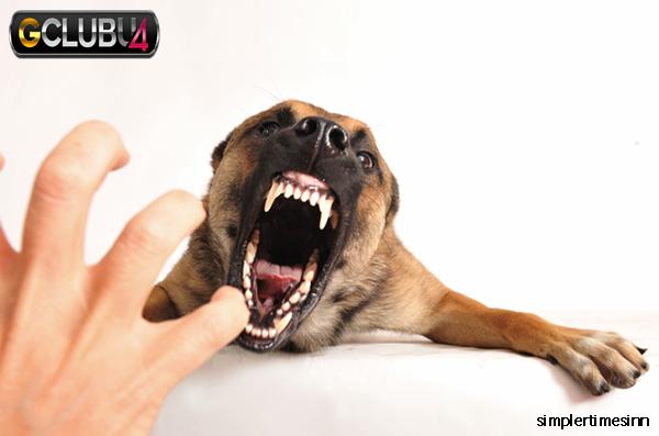 ปัญหาพฤติกรรมของสุนัข