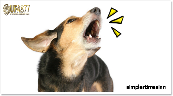 สาเหตุที่สุนัขส่งเสียงหรือเห่าเสียงดัง