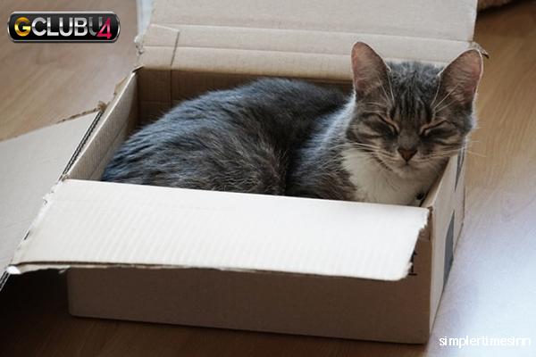 เคล็ดลับในการย้ายบ้านของแมว
