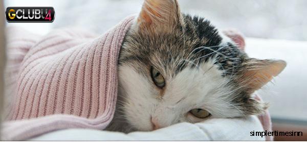 วิธีดูแลแมวป่วยของคุณ